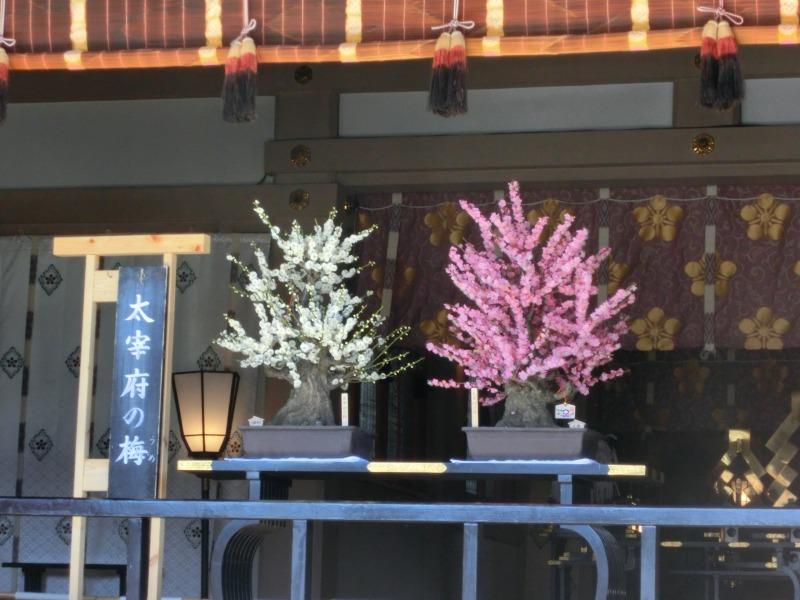 本殿に飾られた梅