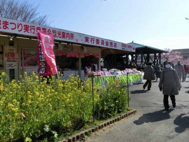 河津桜観光案内所