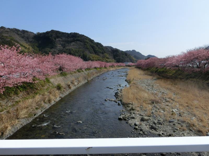 川の両脇に咲く桜