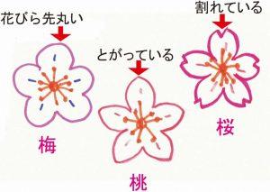 梅・桃・桜の花びらの形