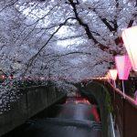 目黒川の桜のライトアップ
