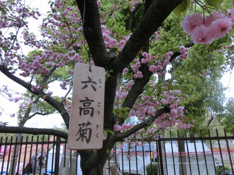 桜と立て札