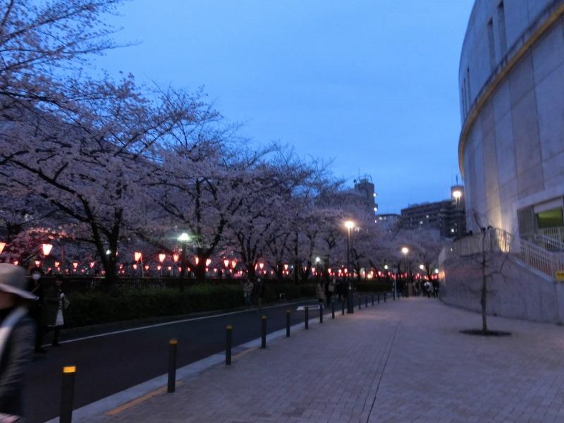 目黒天空庭園と桜