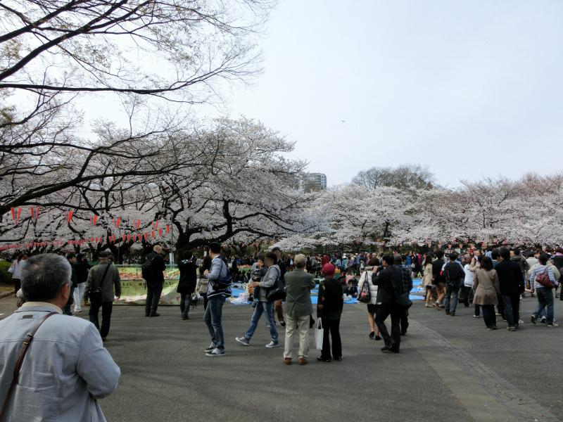 上野公園の桜の花見客たち