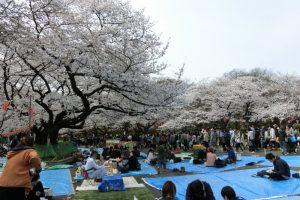 上野公園 お花見