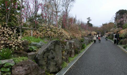 花桃の参道