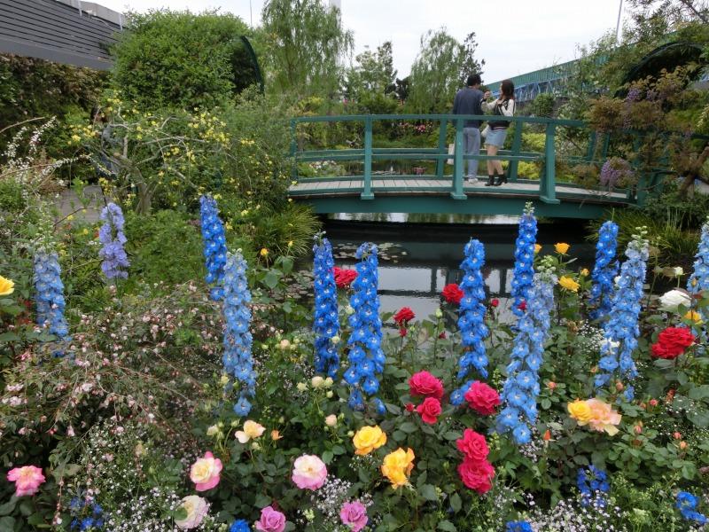睡蓮の池と周りの花