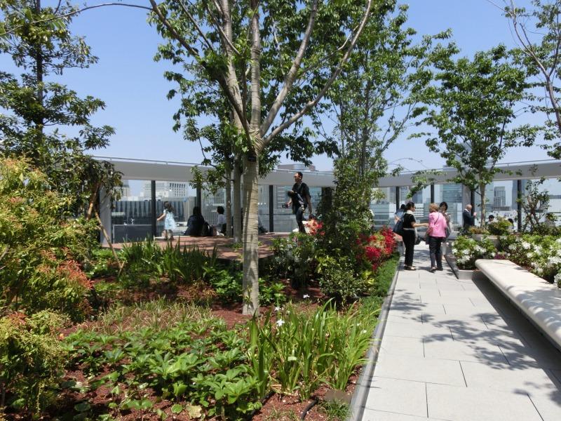 屋上の植栽