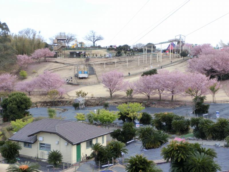 伊豆ぐらんぱる公園を望む