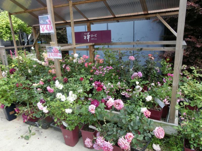 バラの苗の販売