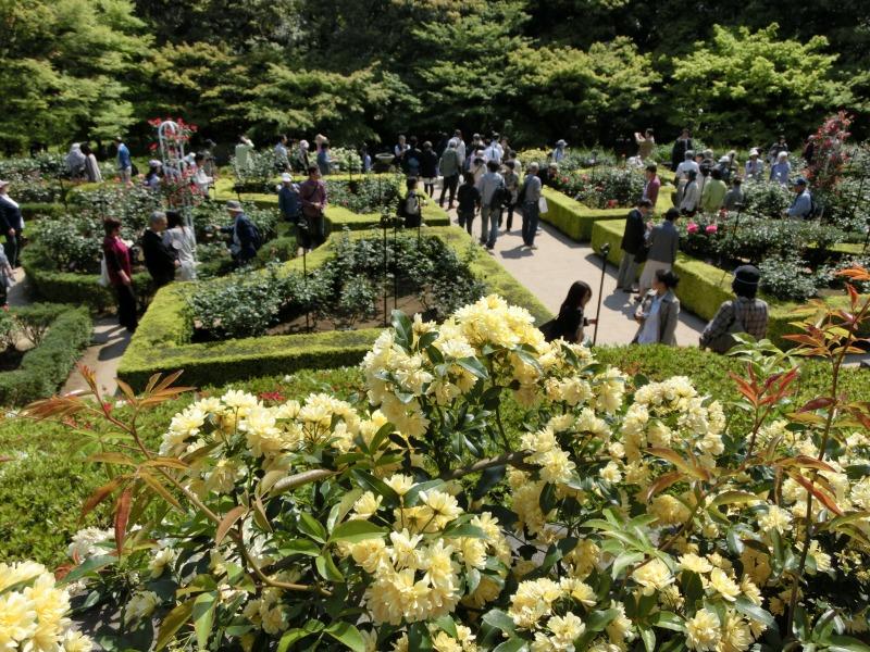 旧古川庭園を望む