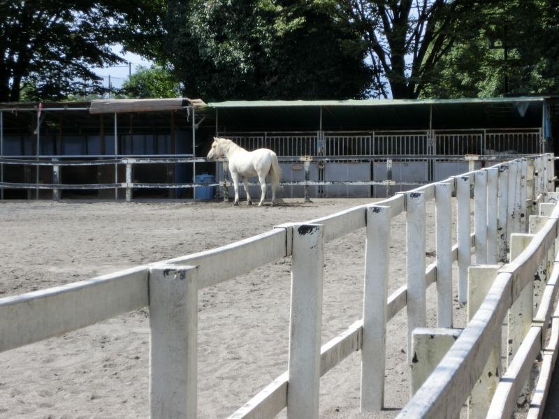ふれあい動物広場の馬
