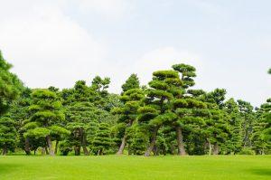 緑多い皇居