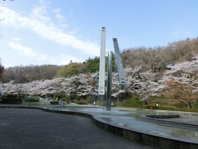 芦ヶ谷公園の桜