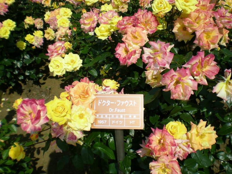 バラの名札