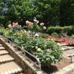 相模原北公園の花木園