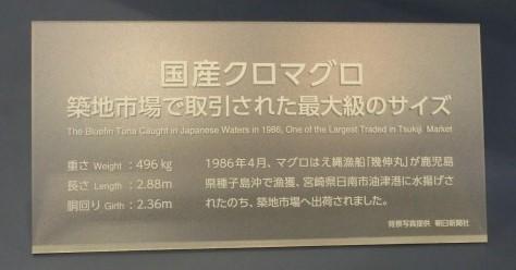 過去最高重量のマグロ