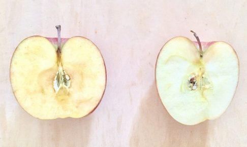 りんごの老化
